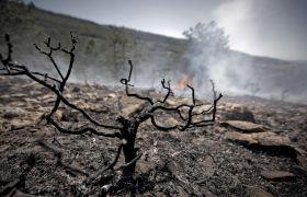 Incendiu pe insula greceasca Zakynthos. 70 persoane evacuate de pe plaja