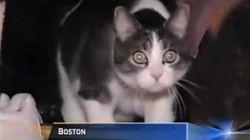 O pisica a fost citata ca membra a juriului intr-un proces din SUA