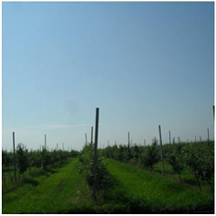 De vanzare livada 200 ha in Republica MOLDOVA