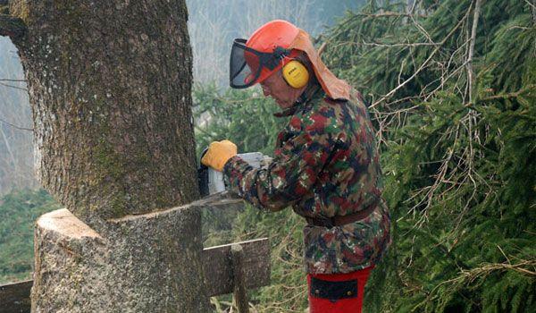 lucrator forestier  in Germania