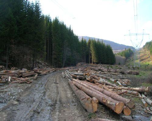 MUNCA FORESTIERA GERMANIA