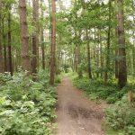 FAZ: Compania alimentară Nestlé promite plantarea a 200 de milioane de copaci – Companii