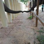 """Kaavan, """"cel mai singur elefant din lume"""", s-a întâlnit cu un seamăn de-al său, pentru prima oară în ultimii opt ani VIDEO – Mediu"""