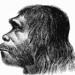 Studii noi relevă că neanderthalienii au pictat peșteri în Europa cu mult înaintea oamenilor moderni – Arheologie
